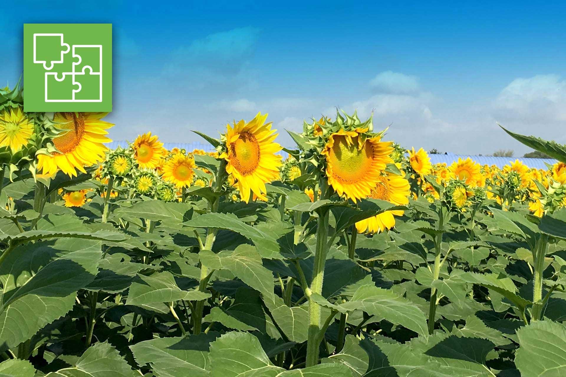 Fertilizzanti biologici innovativi. Un corso gratuito di 20 ore