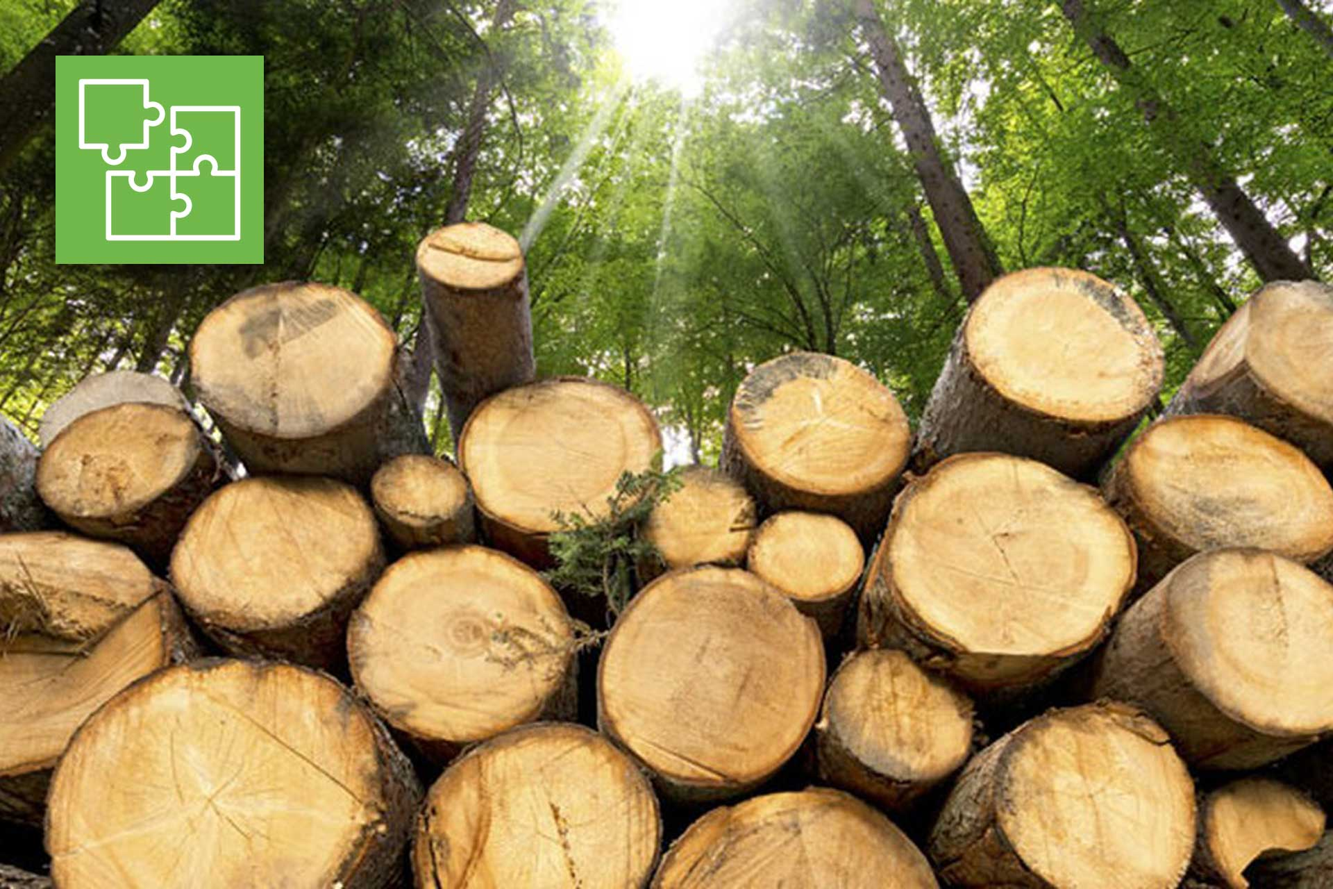 Filiera legno agroenergia. Quattro workshop di Agricoltura è Vita Etruria, il calendario